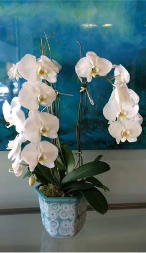 Custom live orchids by local florist